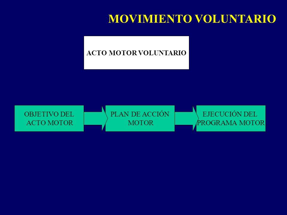 ACTO MOTOR VOLUNTARIO OBJETIVO DEL ACTO MOTOR PLAN DE ACCIÓN MOTOR EJECUCIÓN DEL PROGRAMA MOTOR MOVIMIENTO VOLUNTARIO