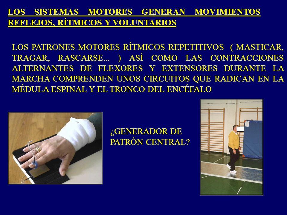 LOS PATRONES MOTORES RÍTMICOS REPETITIVOS ( MASTICAR, TRAGAR, RASCARSE... ) ASÍ COMO LAS CONTRACCIONES ALTERNANTES DE FLEXORES Y EXTENSORES DURANTE LA