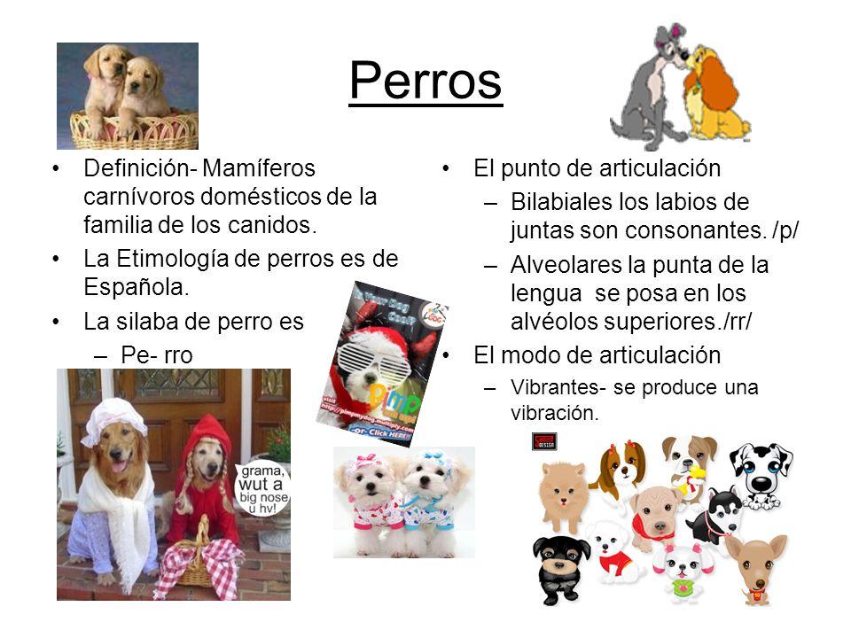 Perros Definición- Mamíferos carnívoros domésticos de la familia de los canidos.