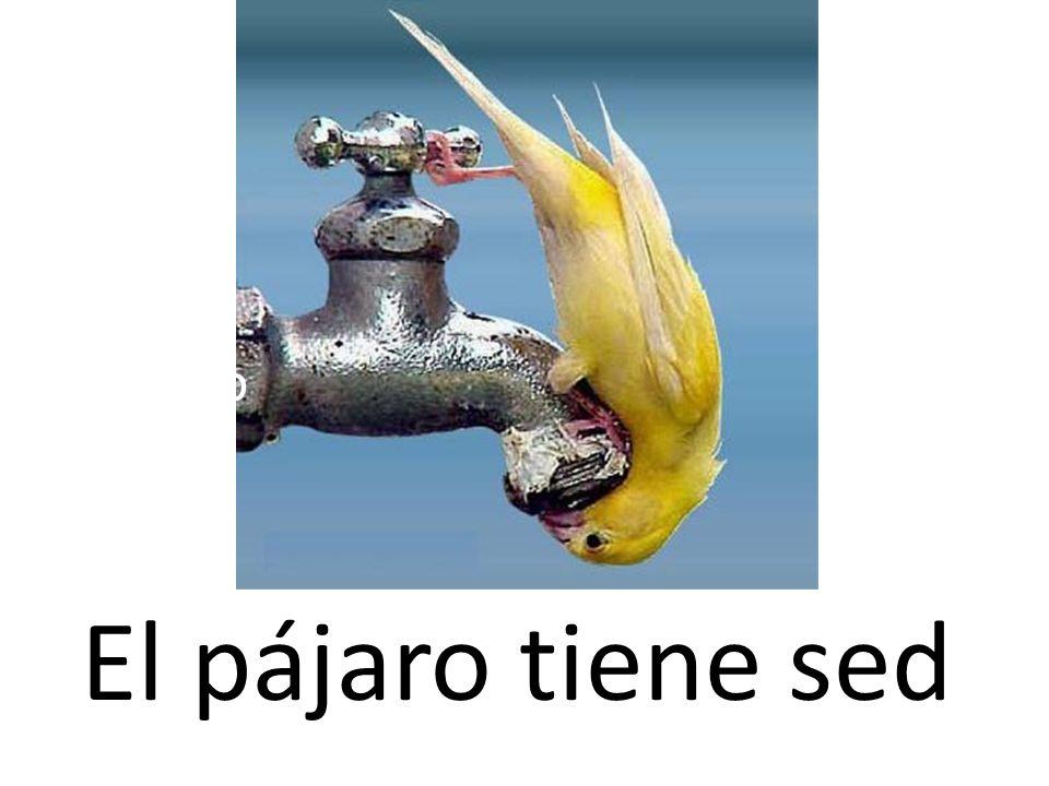 El pájaro 12El pájaro tiene sed