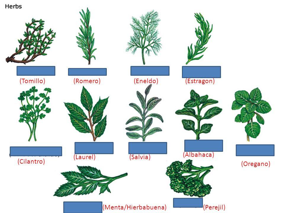 (Pomelo) (albaricoque) (Mora) (Grosella) (Pera) (Peər)) (Manzana) (naranja) (melocotón) (mango) (higo) (sandia) (dátil) (frambuesa) (olive) (ciruela) (cereza) (melón)