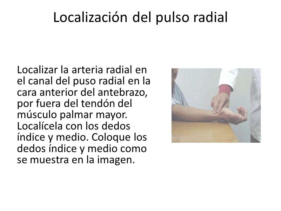 Localización del pulso radial Localizar la arteria radial en el canal del puso radial en la cara anterior del antebrazo, por fuera del tendón del músculo palmar mayor.