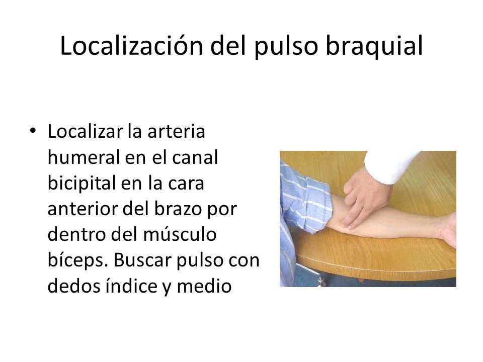 Localización del pulso braquial Localizar la arteria humeral en el canal bicipital en la cara anterior del brazo por dentro del músculo bíceps.