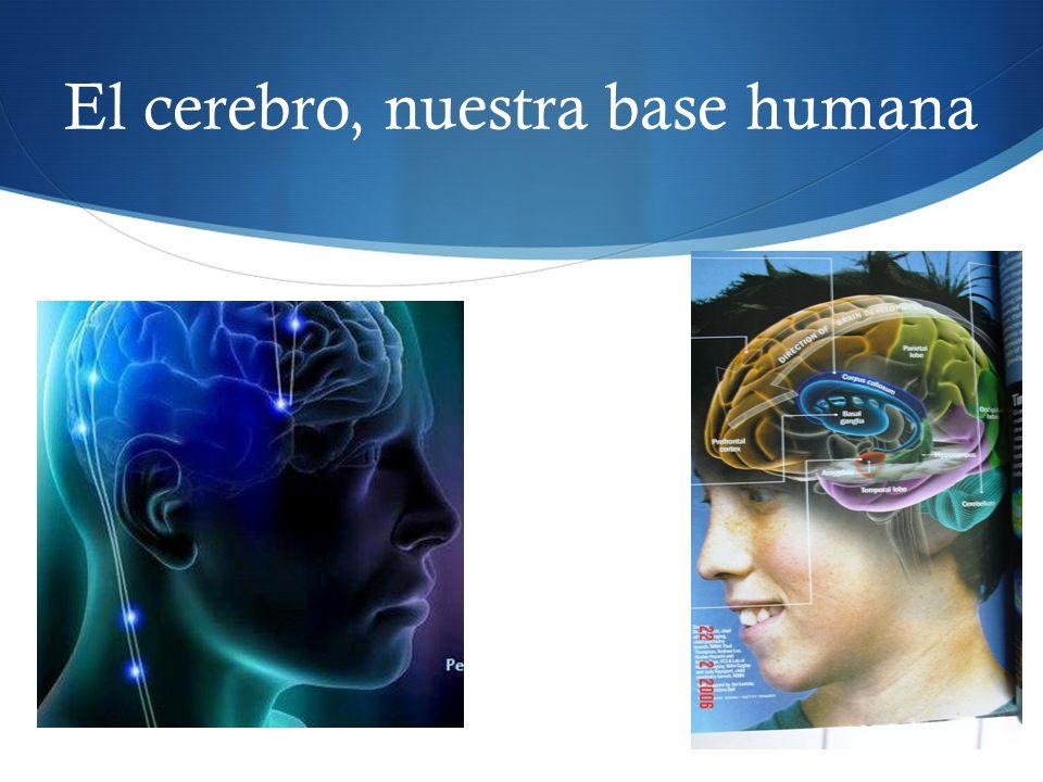 El cerebro, nuestra base humana