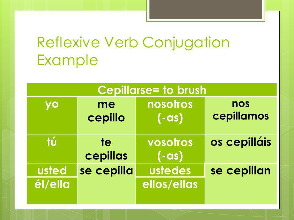 Reflexive Verb Conjugation Example Cepillarse= to brush yome cepillo nosotros (-as) nos cepillamos túte cepillas vosotros (-as) os cepilláis ustedse cepillaustedesse cepillan él/ellaellos/ellas