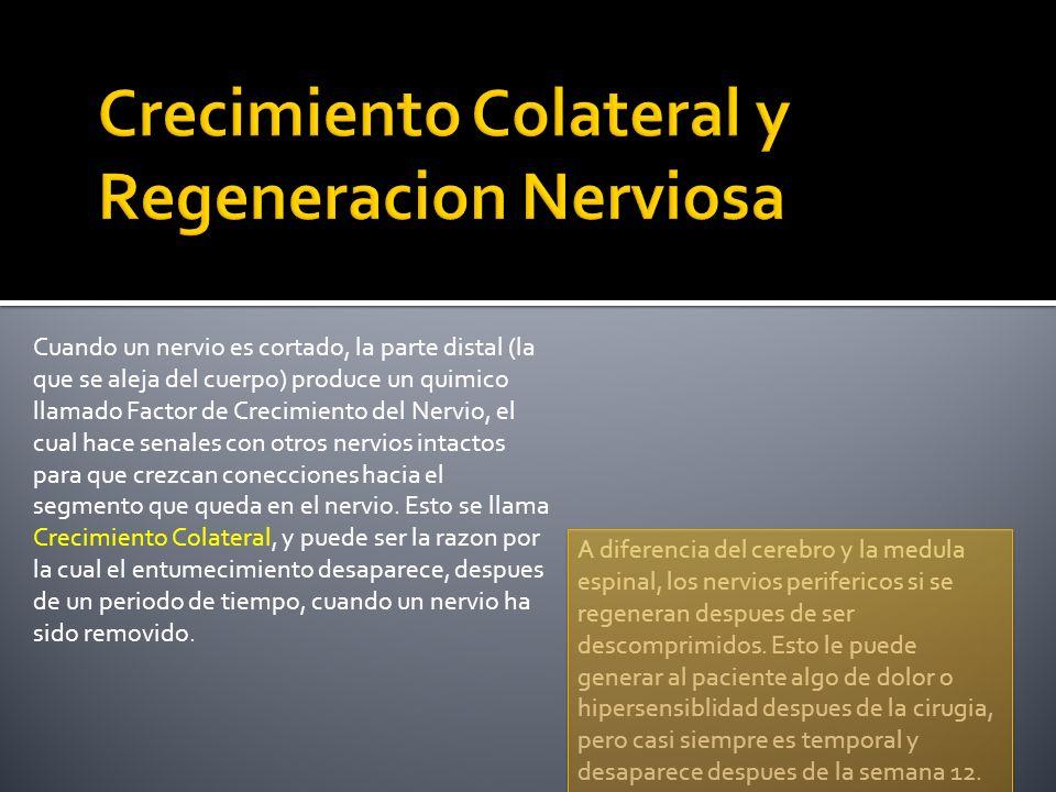 Cuando un nervio es cortado, la parte distal (la que se aleja del cuerpo) produce un quimico llamado Factor de Crecimiento del Nervio, el cual hace se