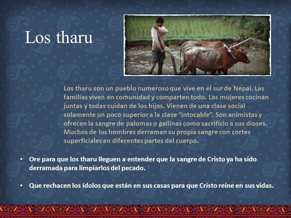 Los tharu Los tharu son un pueblo numeroso que vive en el sur de Nepal. Las familias viven en comunidad y comparten todo. Las mujeres cocinan juntas y
