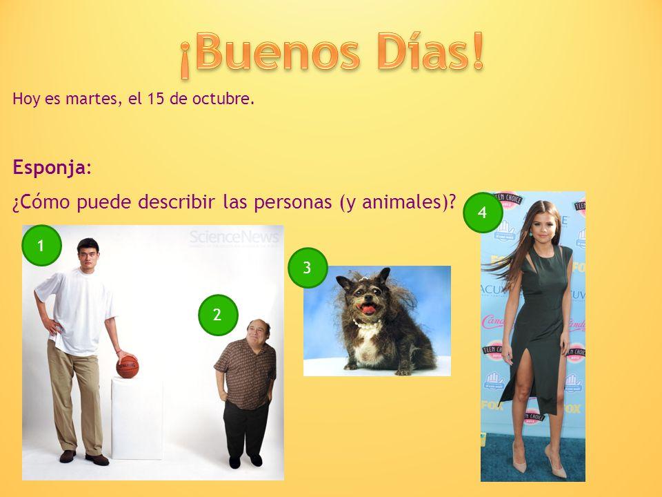 Hoy es martes, el 15 de octubre. Esponja: ¿Cómo puede describir las personas (y animales)? 1 2 3 4