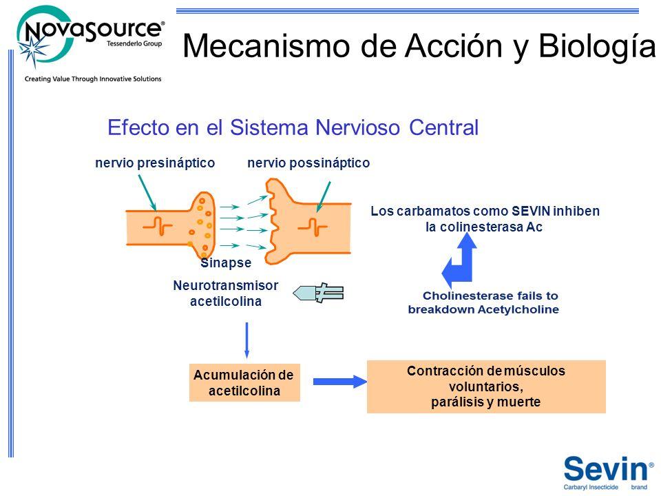 Sinapse Neurotransmisor acetilcolina nervio presinápticonervio possináptico Efecto en el Sistema Nervioso Central Los carbamatos como SEVIN inhiben la