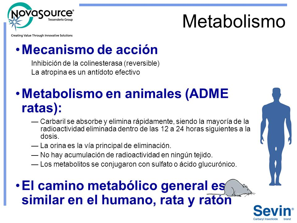 Metabolismo Mecanismo de acción Inhibición de la colinesterasa (reversible) La atropina es un antídoto efectivo Metabolismo en animales (ADME ratas):