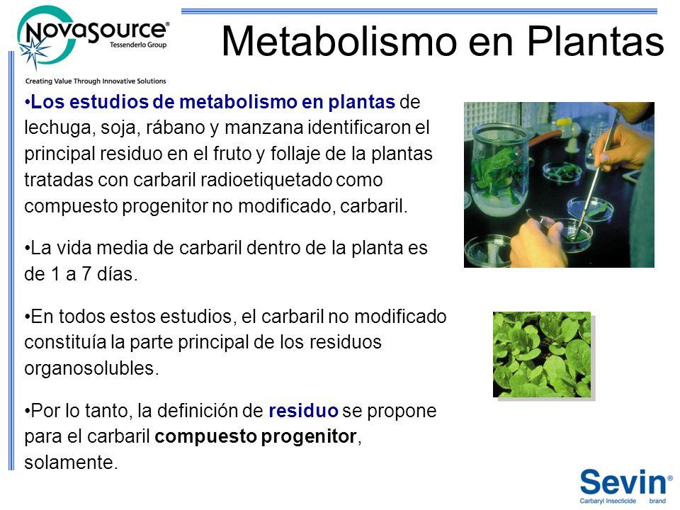 Metabolismo en Plantas Los estudios de metabolismo en plantas de lechuga, soja, rábano y manzana identificaron el principal residuo en el fruto y foll