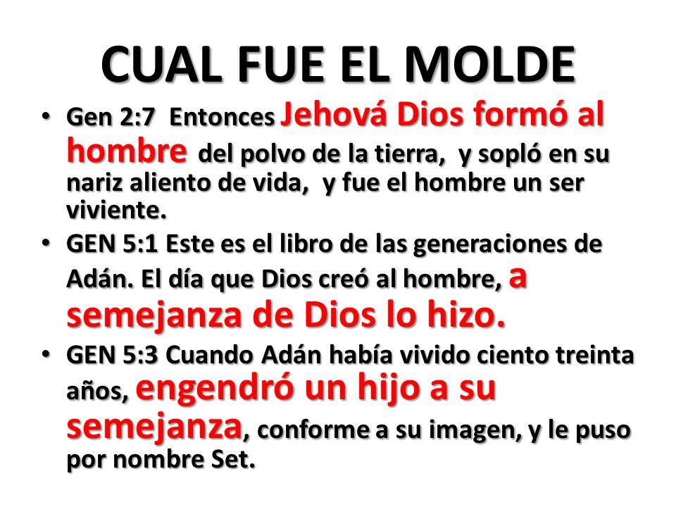 CUAL FUE EL MOLDE Gen 2:7 Entonces Jehová Dios formó al hombre del polvo de la tierra, y sopló en su nariz aliento de vida, y fue el hombre un ser viviente.