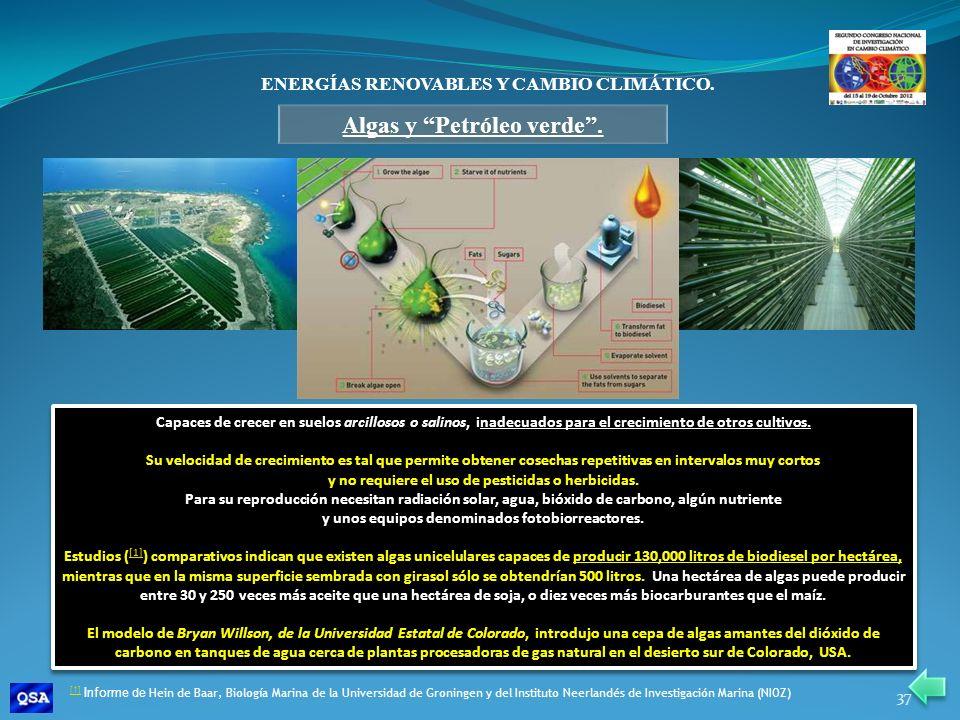 ENERGÍAS RENOVABLES Y CAMBIO CLIMÁTICO. Algas y Petróleo verde. Capaces de crecer en suelos arcillosos o salinos, inadecuados para el crecimiento de o