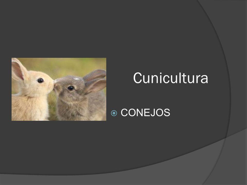 ALIMENTACION Al principio de la gestación normalmente la coneja todavía se encuentra en lactación; por lo tanto es lógico que se le suministre una alimentación a voluntad.