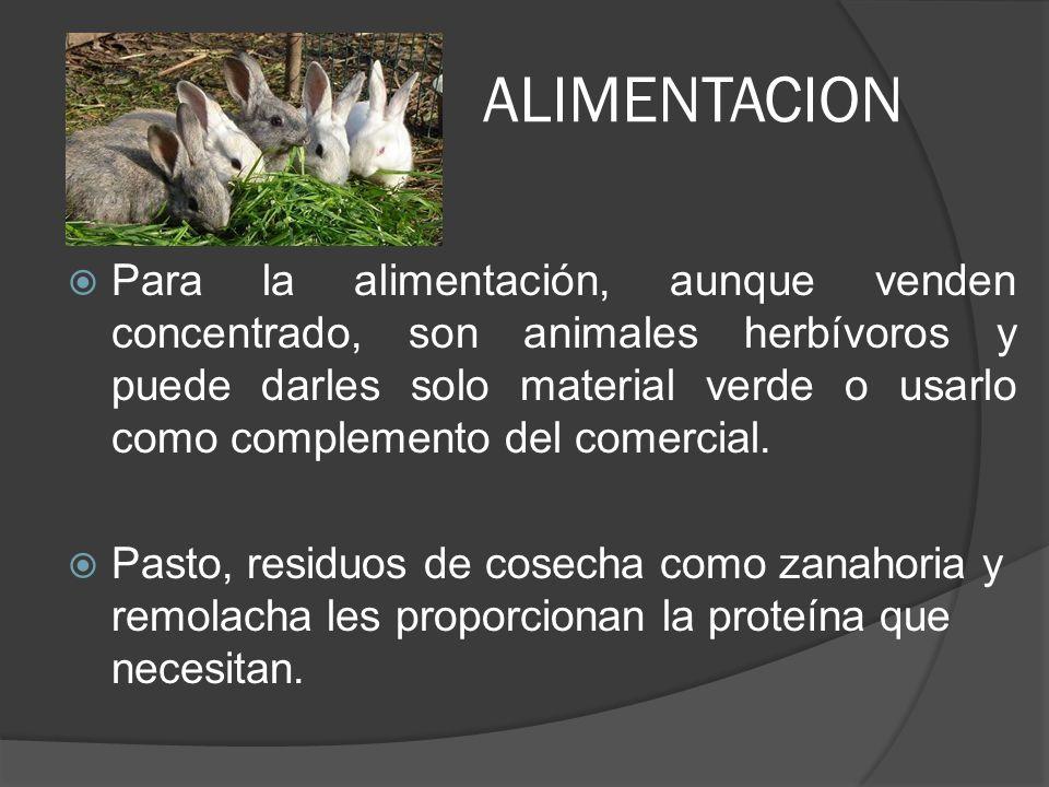 GESTACIÓN DURACIÓN: La gestación en la coneja dura entre 28 y 34 días.