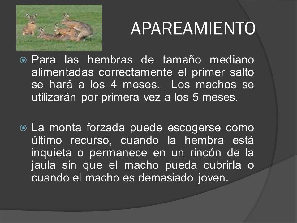 MANEJO DE LOS CONEJOS El nacimiento, los gazapos son incapaces de asegurarse por sí mismos, la temperatura necesaria para el buen funcionamiento de sus organismos.