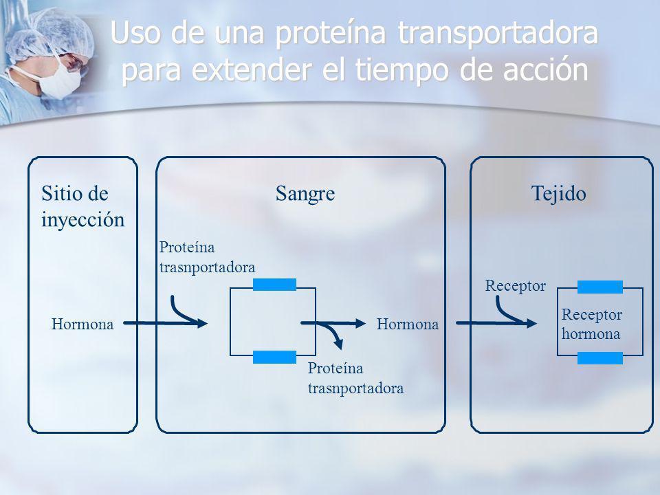 Sitio de inyección Hormona Sangre Hormona Proteína trasnportadora Tejido Receptor hormona Uso de una proteína transportadora para extender el tiempo de acción Proteína trasnportadora