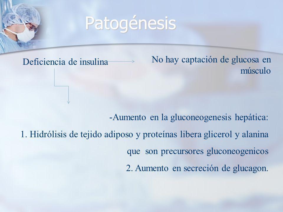 Patogénesis Deficiencia de insulina -Aumento en la gluconeogenesis hepática: 1.