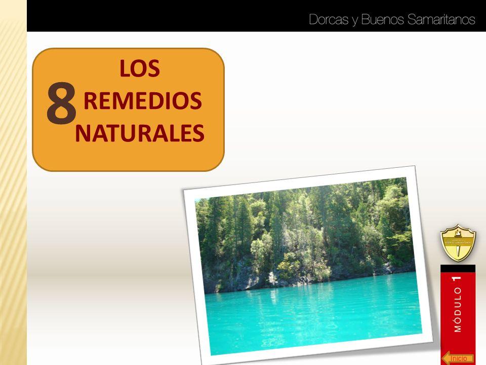 Inicio LOS REMEDIOS NATURALES 8