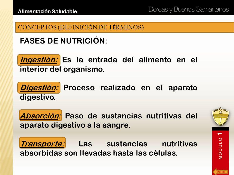 Inicio Alimentación Saludable CONCEPTOS (DEFINICI Ó N DE T É RMINOS) FASES DE NUTRICIÓN: Ingestión: Es la entrada del alimento en el interior del orga