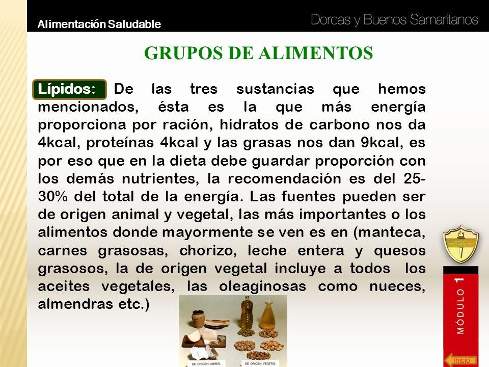 Inicio Alimentación Saludable GRUPOS DE ALIMENTOS Lípidos: De las tres sustancias que hemos mencionados, ésta es la que más energía proporciona por ra