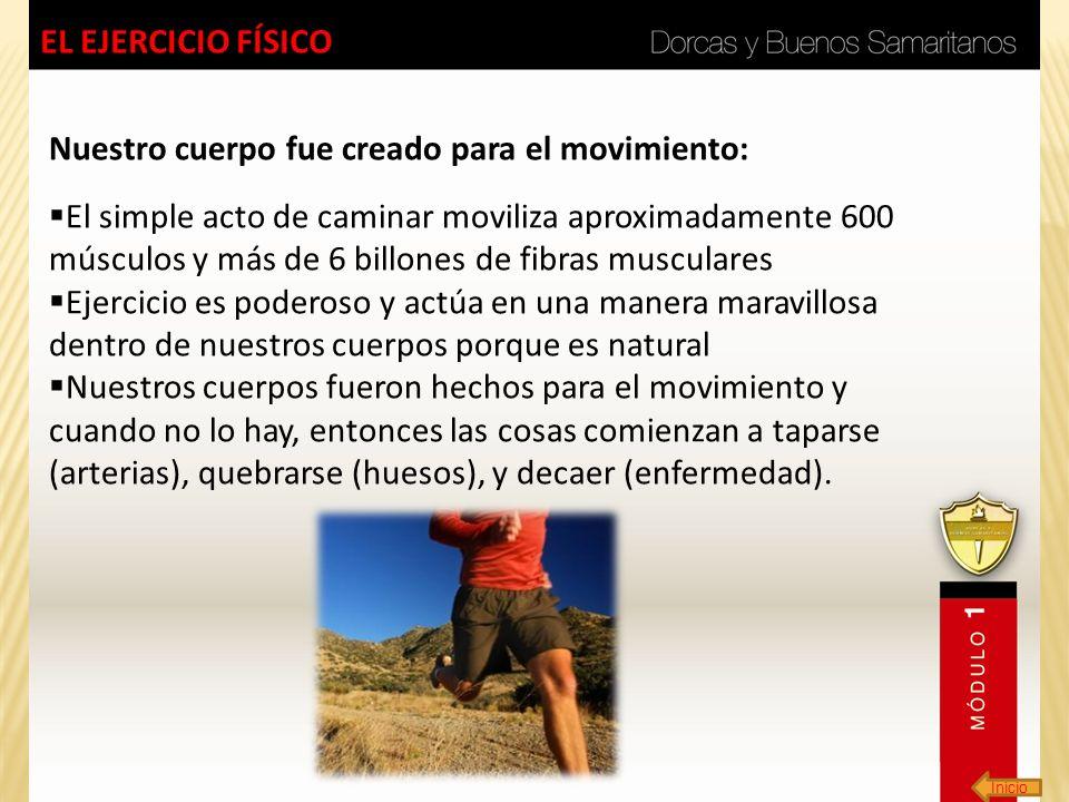 Inicio EL EJERCICIO FÍSICO Nuestro cuerpo fue creado para el movimiento: El simple acto de caminar moviliza aproximadamente 600 músculos y más de 6 bi