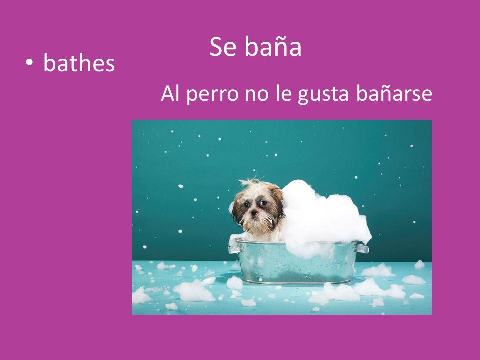Se baña bathes Al perro no le gusta bañarse