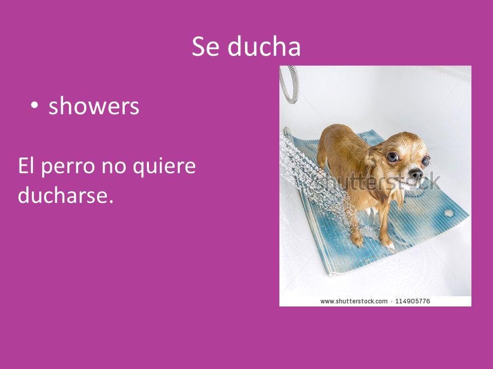 Se ducha showers El perro no quiere ducharse.