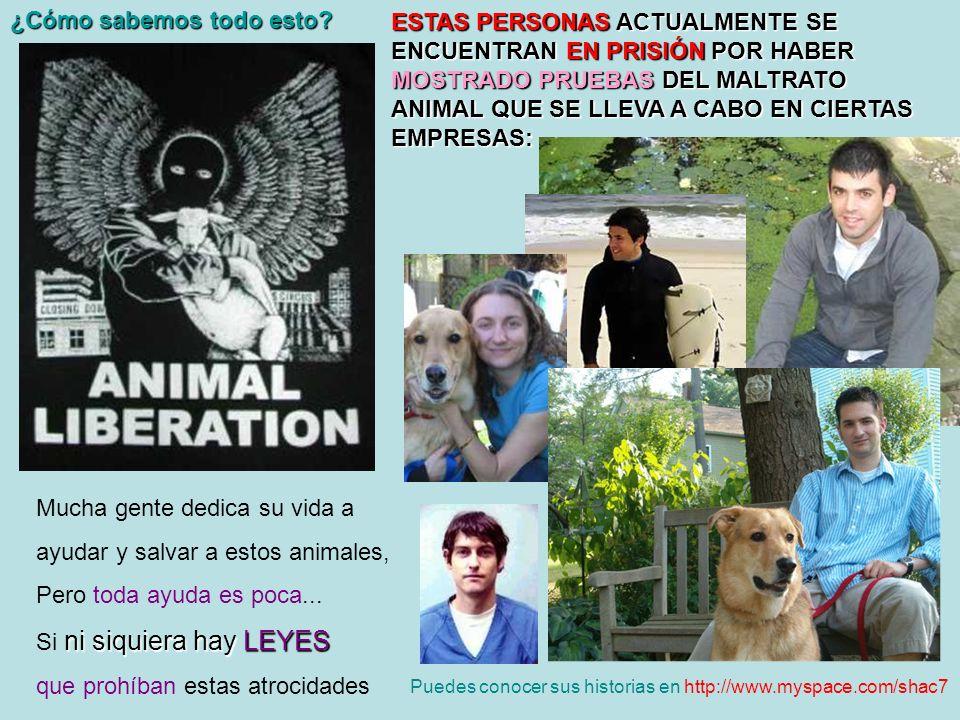 Mucha gente dedica su vida a ayudar y salvar a estos animales, Pero toda ayuda es poca... ni siquiera hay LEYES Si ni siquiera hay LEYES que prohíban