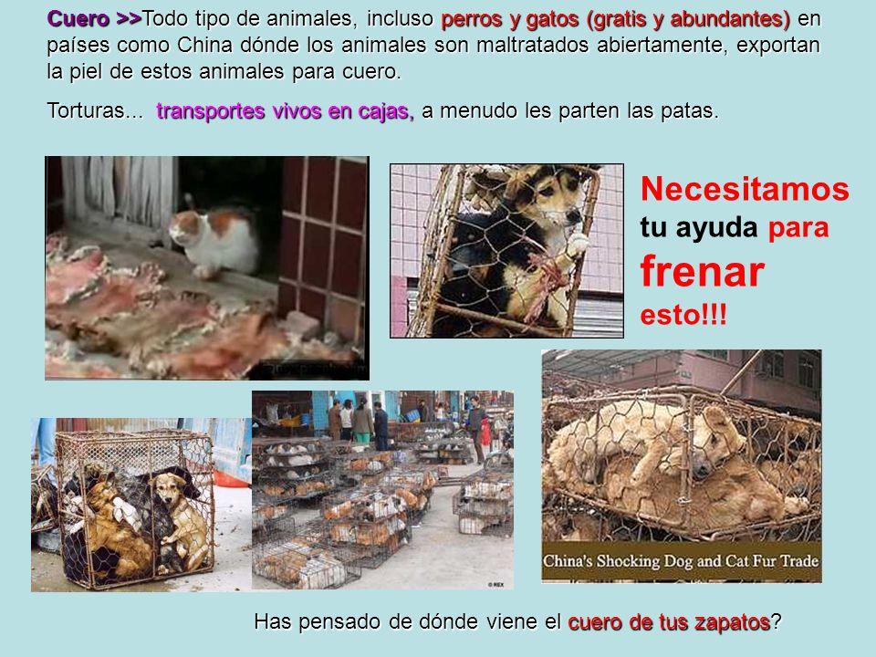 Cuero >>Todo tipo de animales, incluso perros y gatos (gratis y abundantes) en países como China dónde los animales son maltratados abiertamente, expo