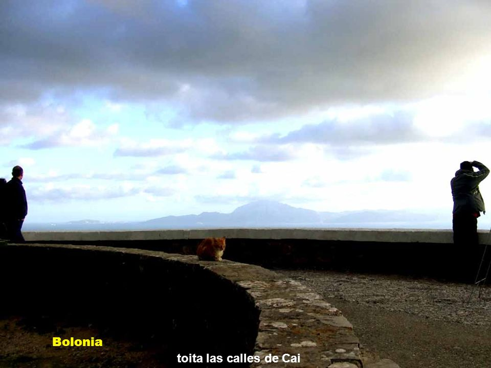 He metío en un relicario Bolonia Ruinas romanas de Baelo Claudia