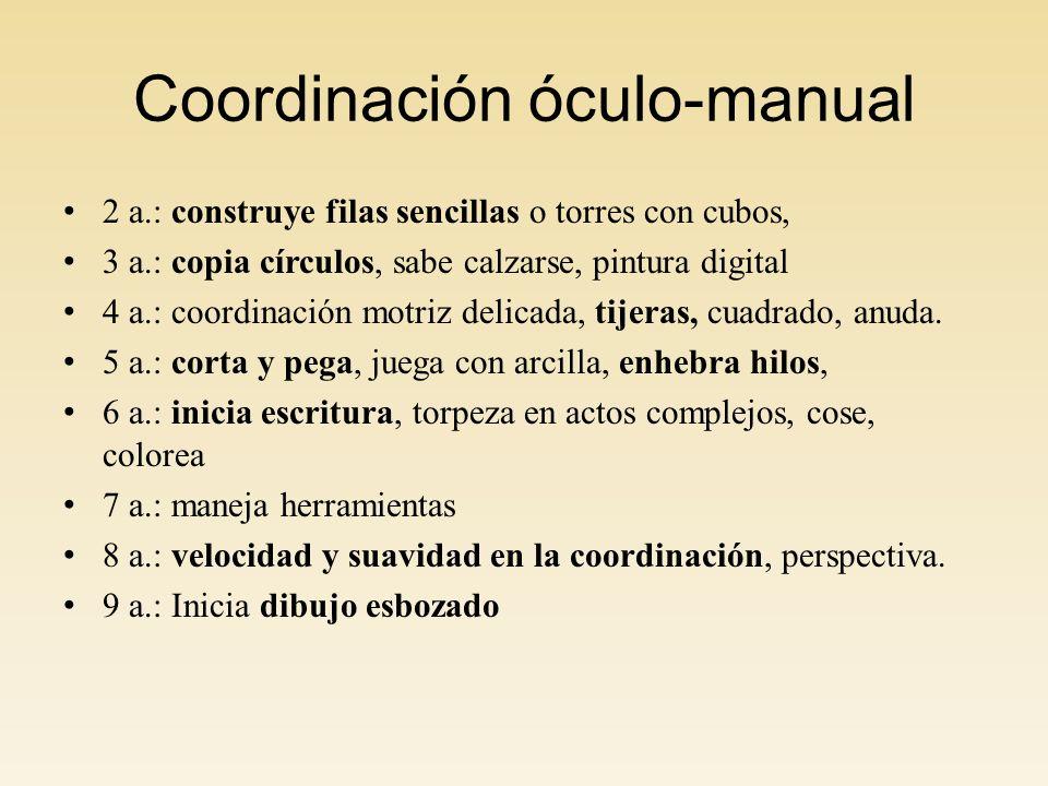 Coordinación óculo-manual 2 a.: construye filas sencillas o torres con cubos, 3 a.: copia círculos, sabe calzarse, pintura digital 4 a.: coordinación motriz delicada, tijeras, cuadrado, anuda.