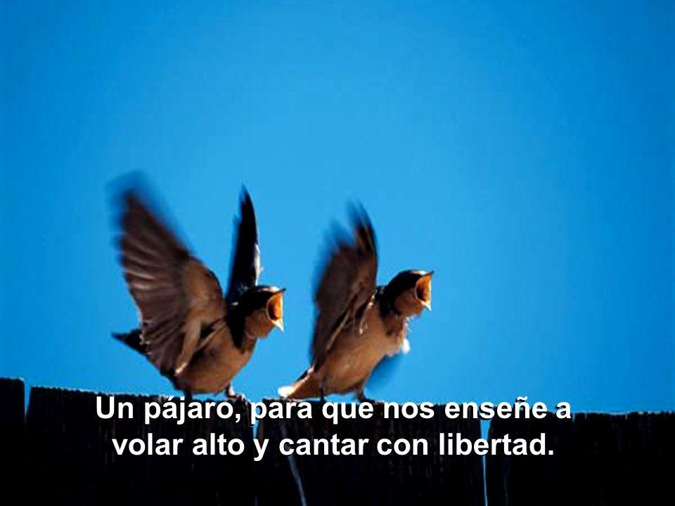Un pájaro, para que nos enseñe a volar alto y cantar con libertad.