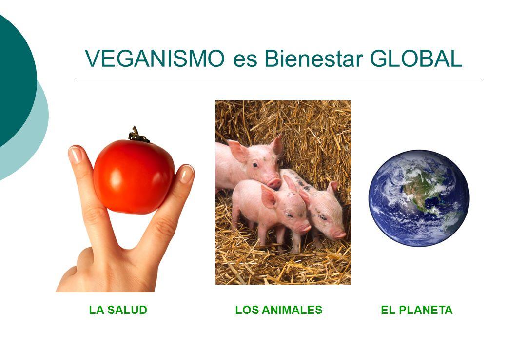 Los padres veganos querrán que su hijo/a: No coma carne ni pescado ni huevos No coma lácteos (leche, queso, yogur, helado…) No coma bollería, galletas, tartas, etc.