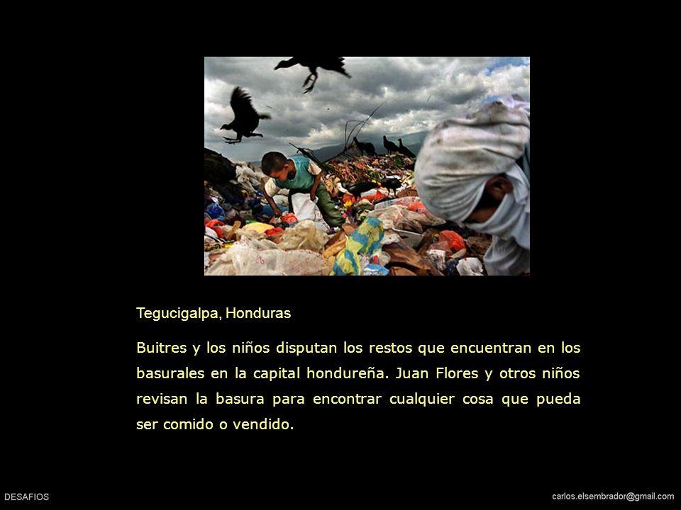 Tegucigalpa, Honduras Buitres y los niños disputan los restos que encuentran en los basurales en la capital hondureña.