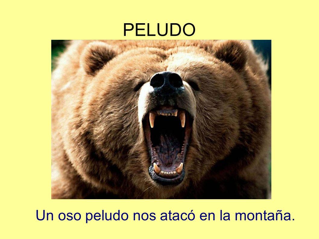 PELUDO Un oso peludo nos atacó en la montaña.