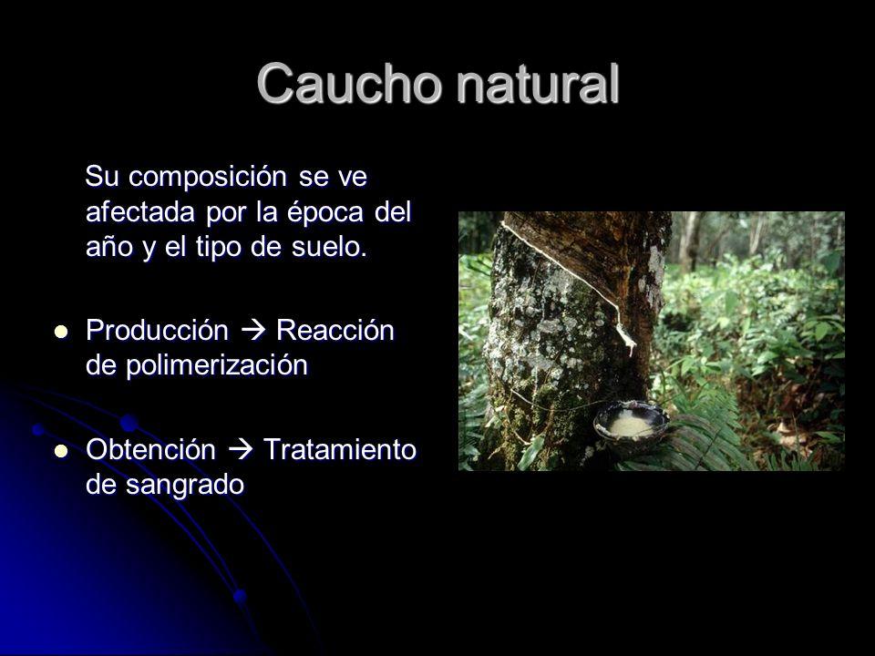Caucho natural Su composición se ve afectada por la época del año y el tipo de suelo. Su composición se ve afectada por la época del año y el tipo de