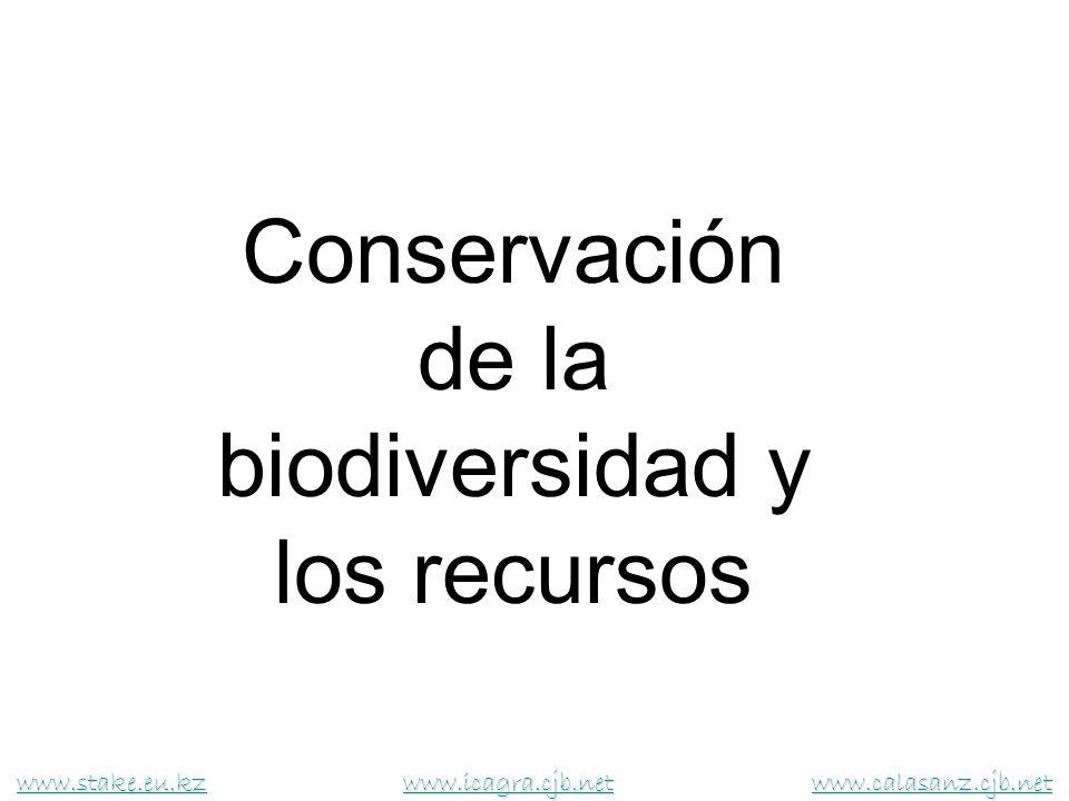 ¿Qué es la biodiversidad.