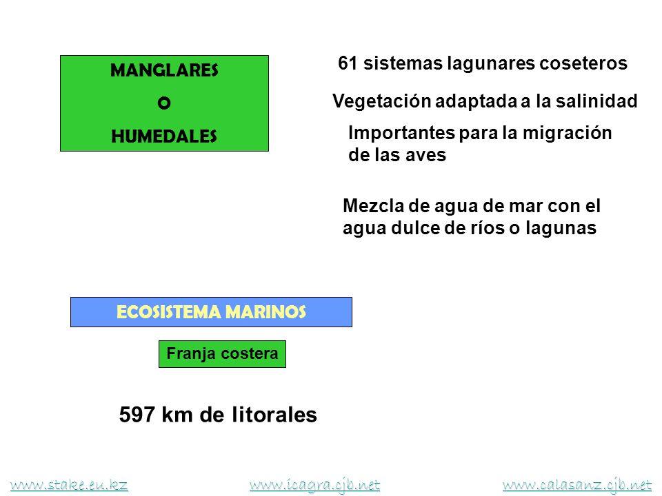 MANGLARES O HUMEDALES 61 sistemas lagunares coseteros Mezcla de agua de mar con el agua dulce de ríos o lagunas Importantes para la migración de las a