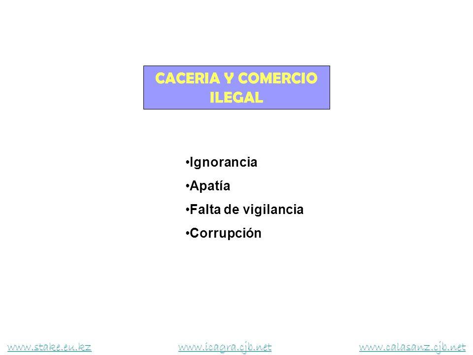 CACERIA Y COMERCIO ILEGAL Ignorancia Apatía Falta de vigilancia Corrupción www.stake.eu.kzwww.stake.eu.kz www.icagra.cjb.net www.calasanz.cjb.net www.