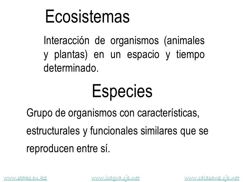 Interacción de organismos (animales y plantas) en un espacio y tiempo determinado. Ecosistemas www.stake.eu.kzwww.stake.eu.kz www.icagra.cjb.net www.c