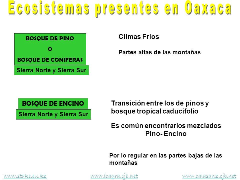 BOSQUE DE PINO O BOSQUE DE CONIFERAS Climas Fríos Partes altas de las montañas Sierra Norte y Sierra Sur www.stake.eu.kzwww.stake.eu.kz www.icagra.cjb