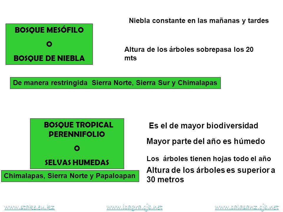 BOSQUE TROPICAL CADUCIFOLIO O SELVA SECA Son de clima calido - seco Existe un prolongado periodo de sequia La mayor parte del año los árboles estan sin hojas La altura de los árboles no es mayor a 10 mts Costa, Cañada Mixteca, Istmo y Valles Centrales www.stake.eu.kzwww.stake.eu.kz www.icagra.cjb.net www.calasanz.cjb.net www.icagra.cjb.netwww.calasanz.cjb.net www.stake.eu.kzwww.icagra.cjb.netwww.calasanz.cjb.net