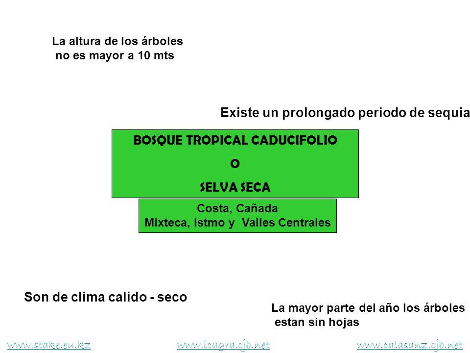 BOSQUE TROPICAL CADUCIFOLIO O SELVA SECA Son de clima calido - seco Existe un prolongado periodo de sequia La mayor parte del año los árboles estan si