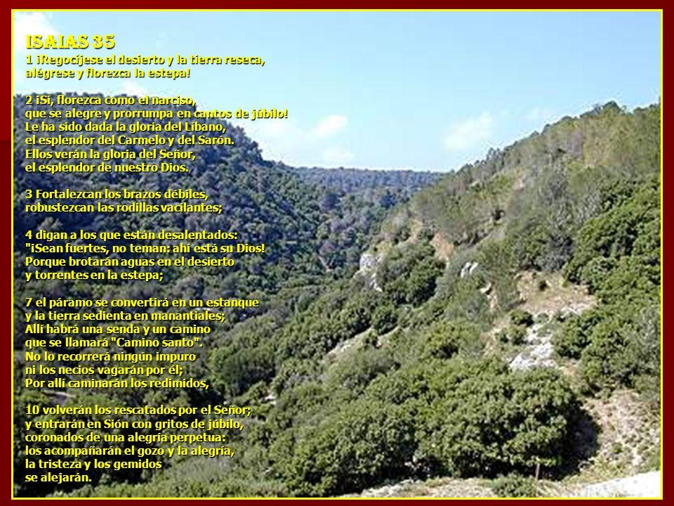 ISAIAS 35 1 ¡Regocíjese el desierto y la tierra reseca, alégrese y florezca la estepa! 2 ¡Sí, florezca como el narciso, que se alegre y prorrumpa en c