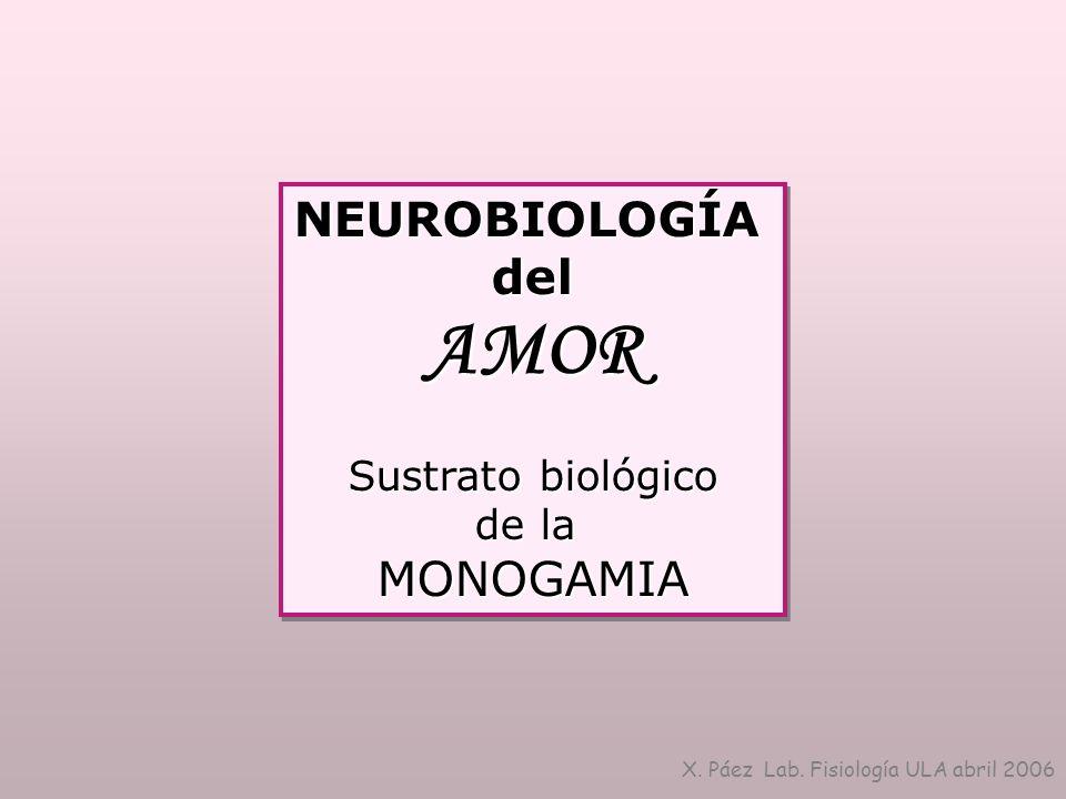NEUROBIOLOGÍAdelAMOR Sustrato biológico de la MONOGAMIANEUROBIOLOGÍAdelAMOR Sustrato biológico de la MONOGAMIA X. Páez Lab. Fisiología ULA abril 2006