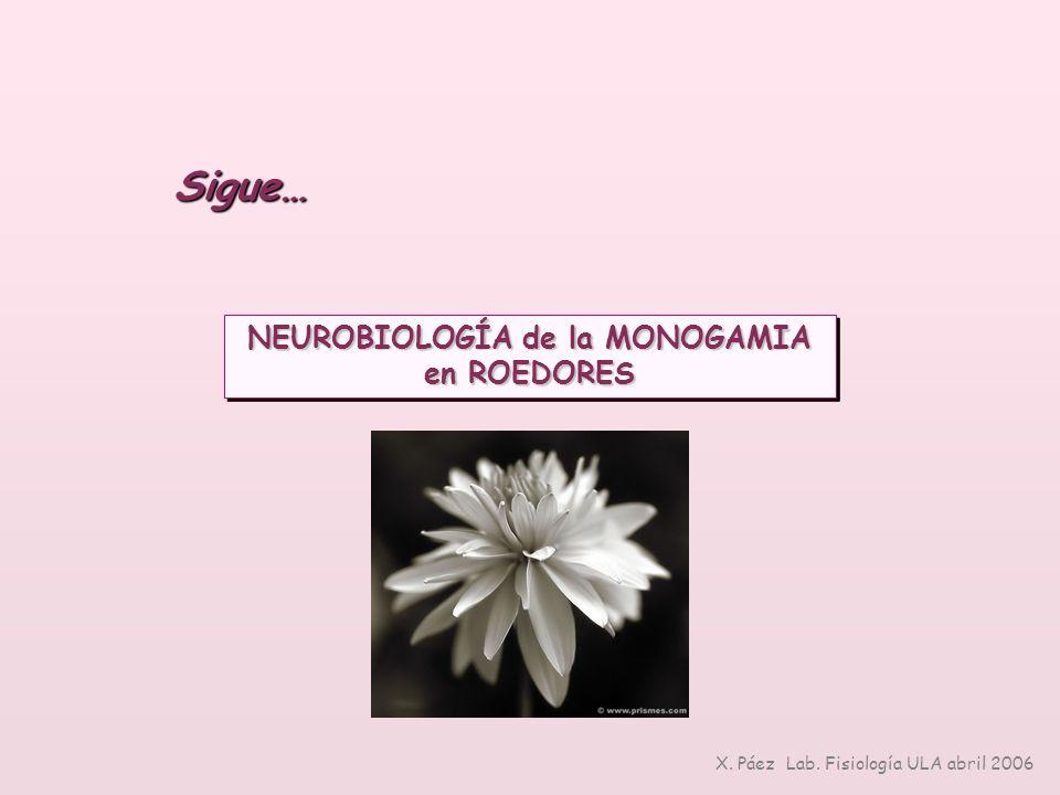 NEUROBIOLOGÍA de la MONOGAMIA en ROEDORES NEUROBIOLOGÍA de la MONOGAMIA en ROEDORES Sigue… X. Páez Lab. Fisiología ULA abril 2006