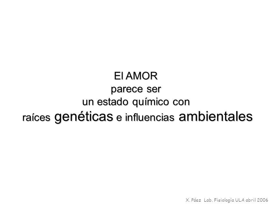 El AMOR parece ser un estado químico con raíces genéticas e influencias ambientales X. Páez Lab. Fisiología ULA abril 2006