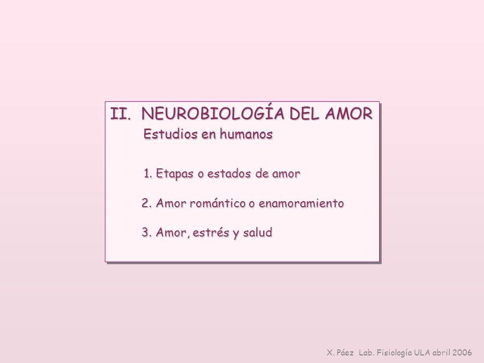II. NEUROBIOLOGÍA DEL AMOR Estudios en humanos Estudios en humanos 1. Etapas o estados de amor 1. Etapas o estados de amor 2. Amor romántico o enamora