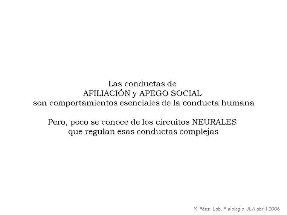 Las conductas de AFILIACIÓN y APEGO SOCIAL son comportamientos esenciales de la conducta humana Pero, poco se conoce de los circuitos NEURALES que reg